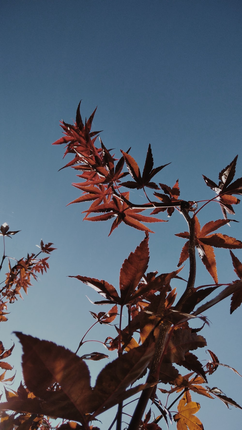 red leaves on tree branch