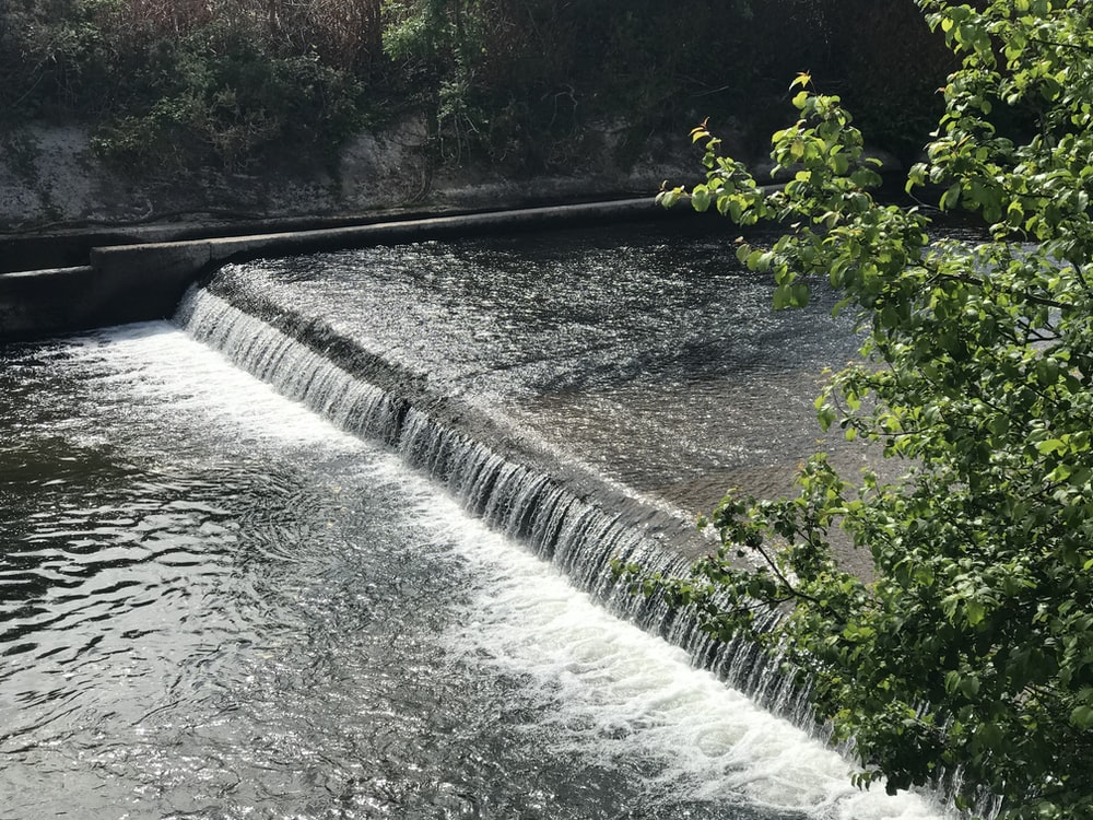 green plant near water falls