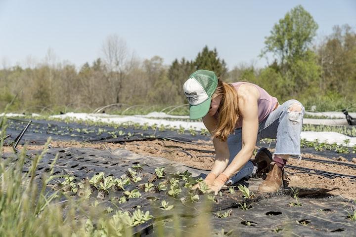 How to Be a Gansta' Gardener