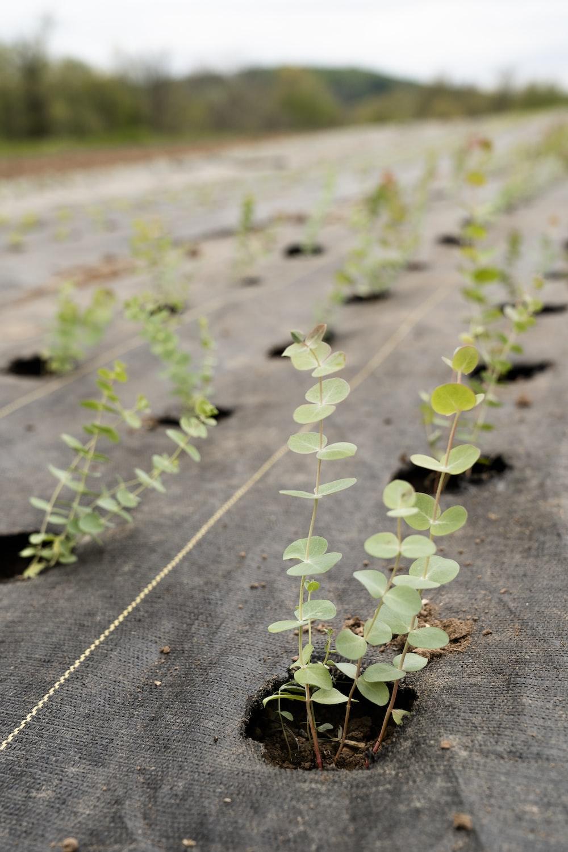 green plant on gray concrete floor