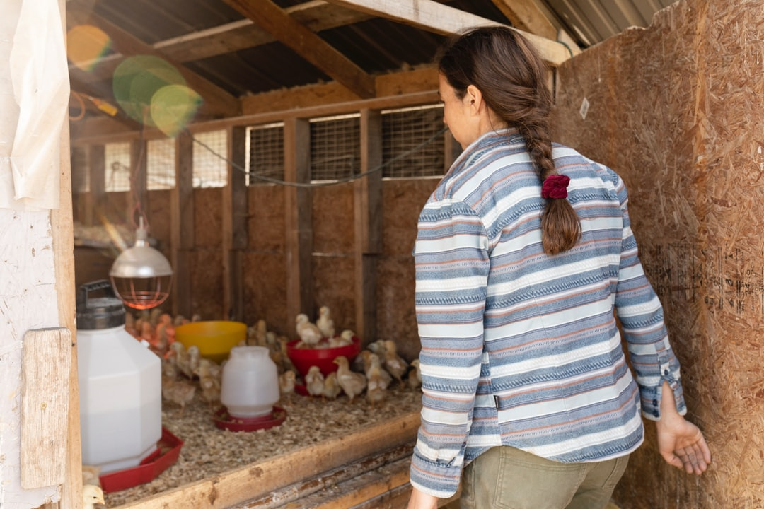 Young farmer Clara Osbourne checks on a brooder of chicks at Pasture Song Farm in Pottstown, PA. Pasture Song is a small-scale, sustainable meat and cut-flower farm. More photography at http://zoeschaeffer.com and http://instagram.com/dirtjoy More from the farm at http://pasturesongfarm.com #regenerativeagriculture #organicfarming #regenerativefarming #farming #youngfarmers #flowerfarm