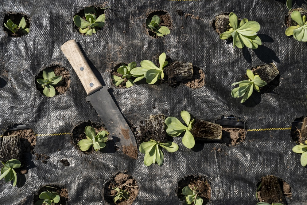 brown handled knife on green leaves