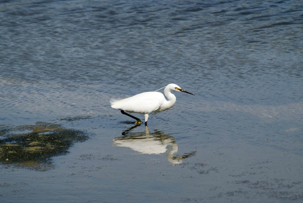 white egret on body of water during daytime