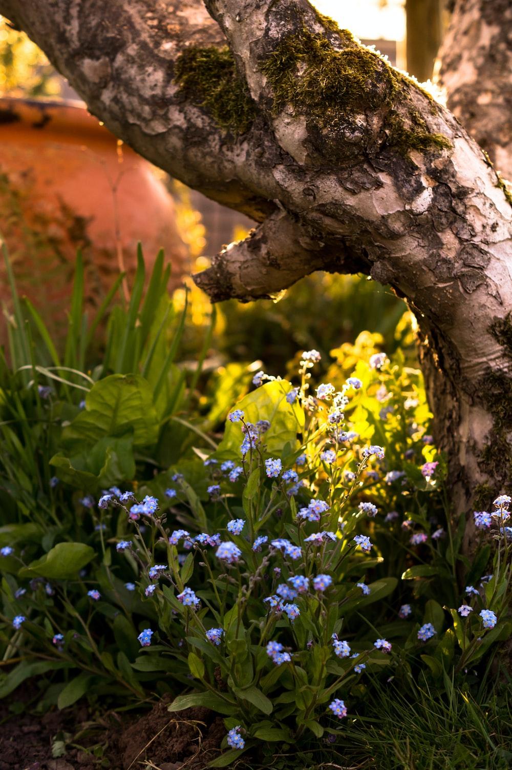 yellow flowers beside brown tree trunk