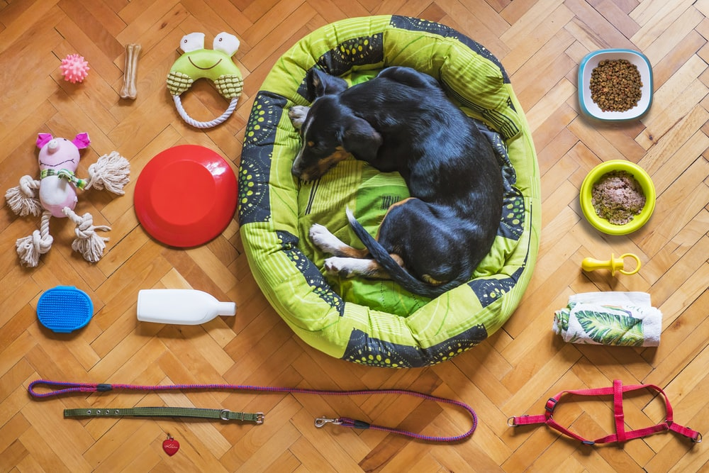 black and tan short coat medium sized dog lying on green and yellow pet bed