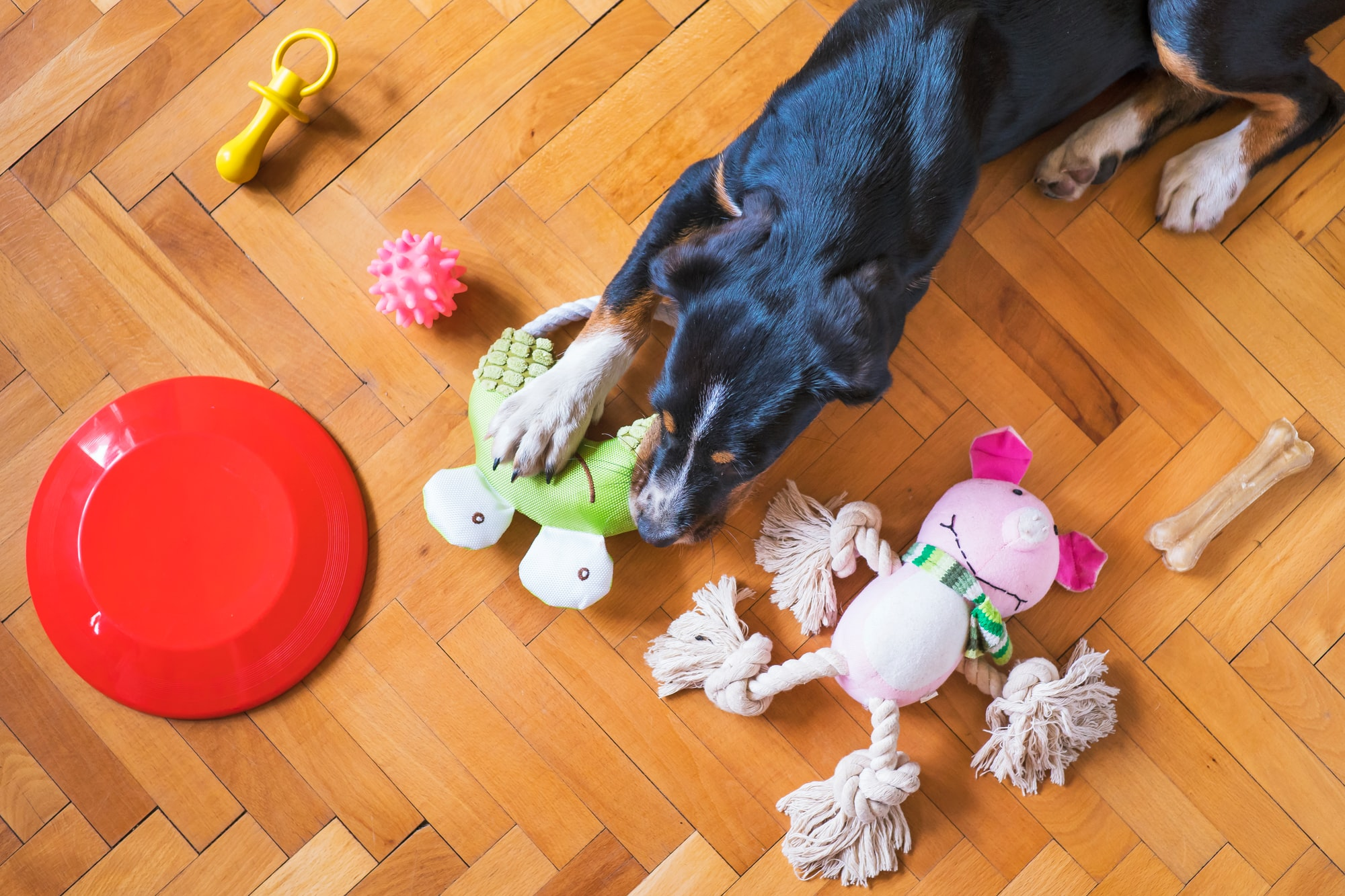 Which Type Of Toys Do Dogs like?