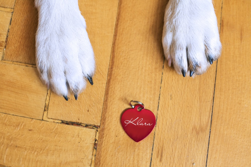 white short coated dog paw on brown wooden surface