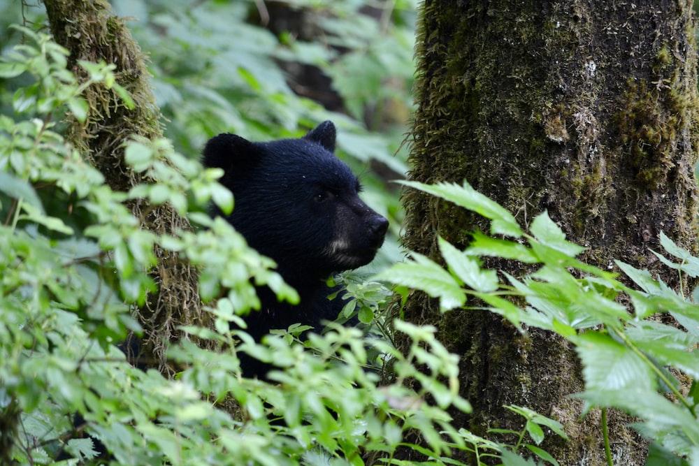 black bear on tree trunk during daytime