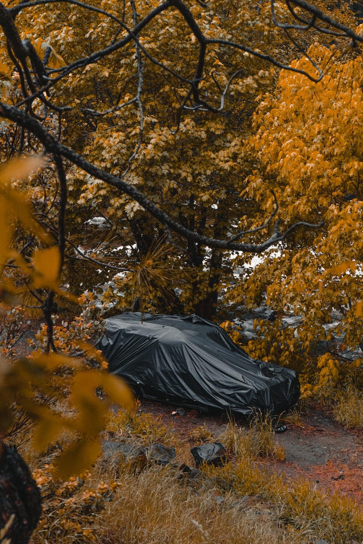 black umbrella on yellow leaves tree