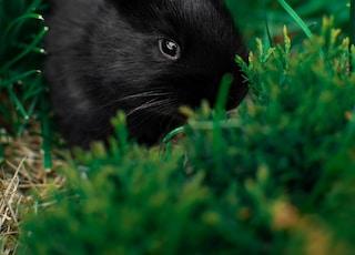 black rabbit on green grass during daytime