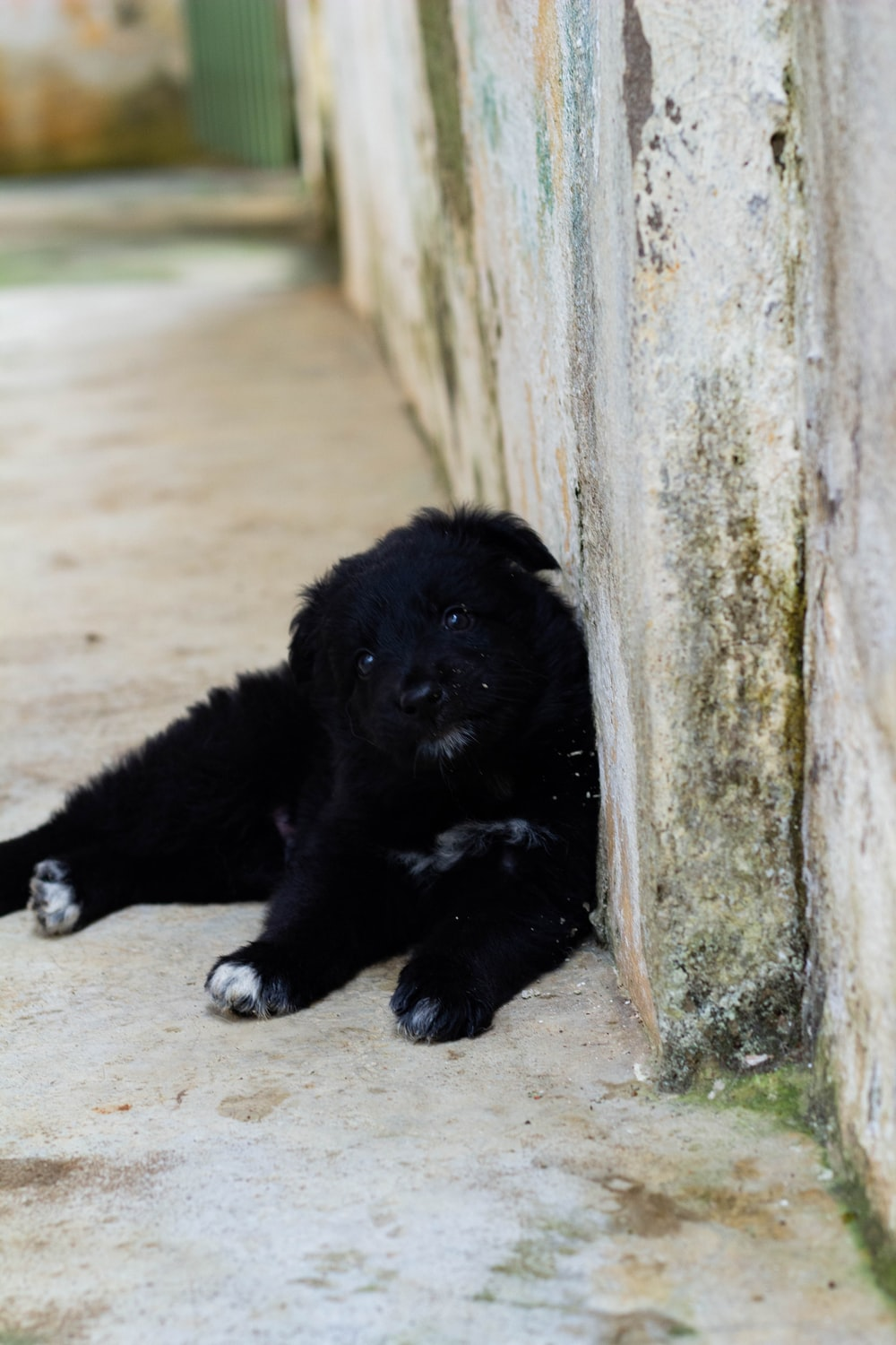 black and white short coated puppy lying on brown sand during daytime