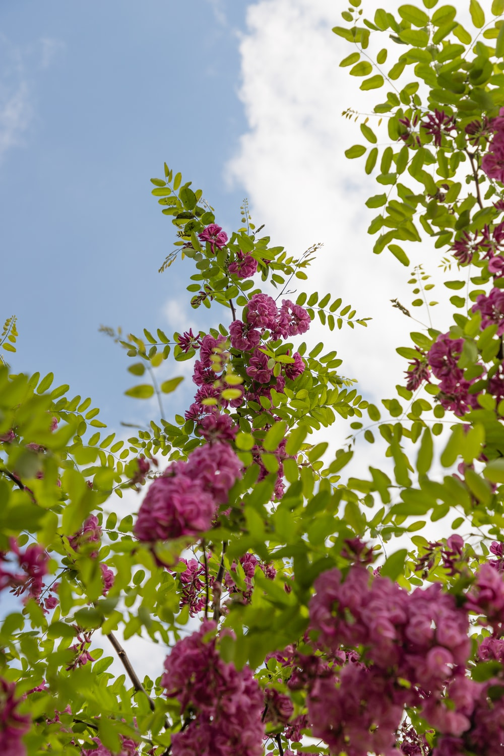 pink flowers with green leaves under blue sky during daytime