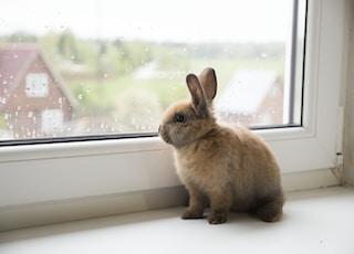 brown rabbit on window during daytime