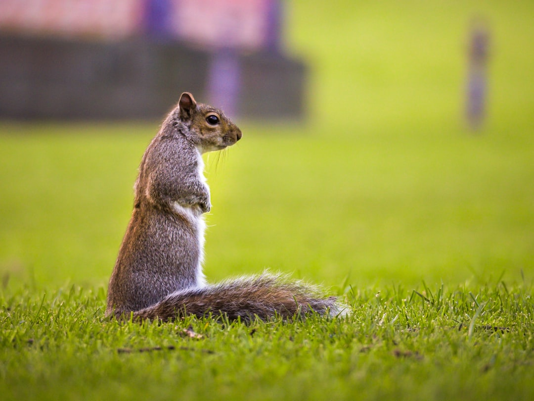 Squirrel standing up in the park