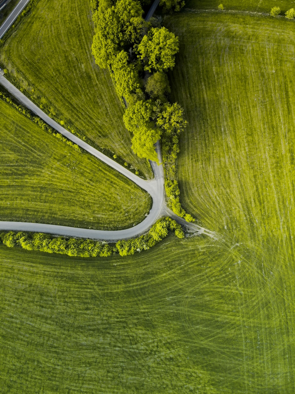 aerial view of green trees on green grass field during daytime