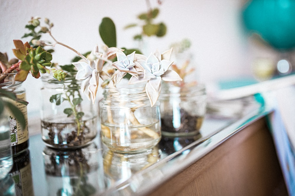 white and green flower in clear glass jar
