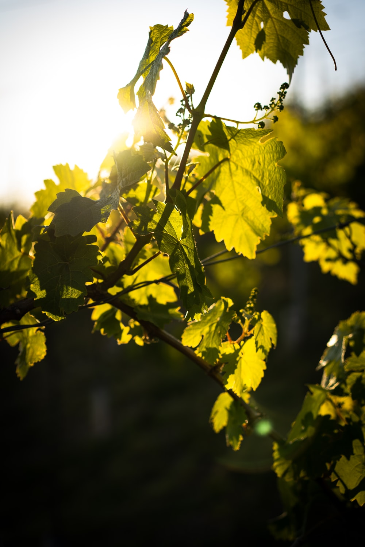 yellow leaf tree during daytime