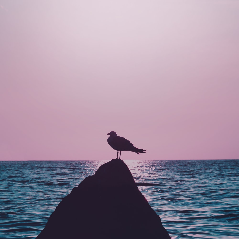 silhouette of bird on rock near sea during daytime