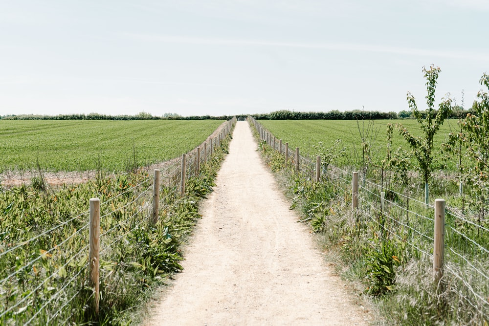 brown dirt road between green grass field under white sky during daytime