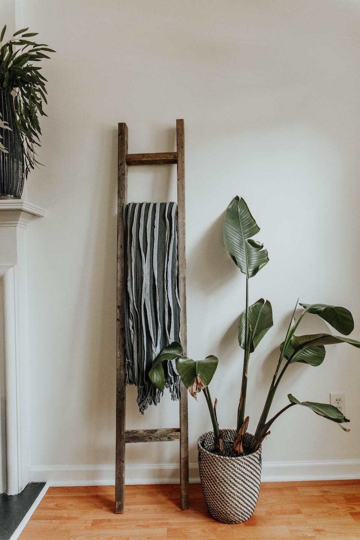 green indoor plant on brown wooden rack