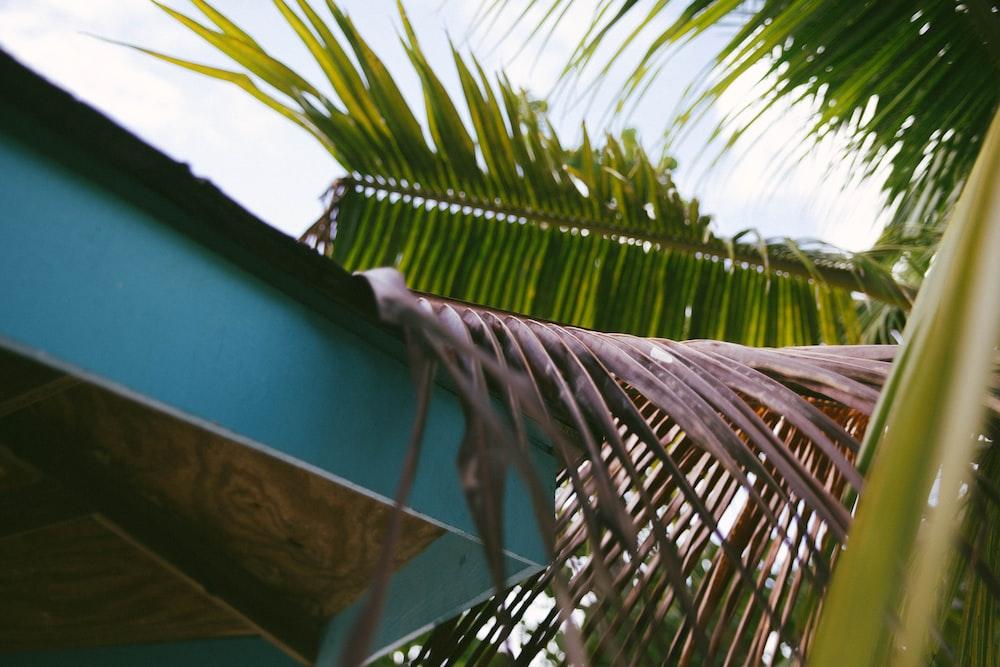green palm tree beside green wooden wall