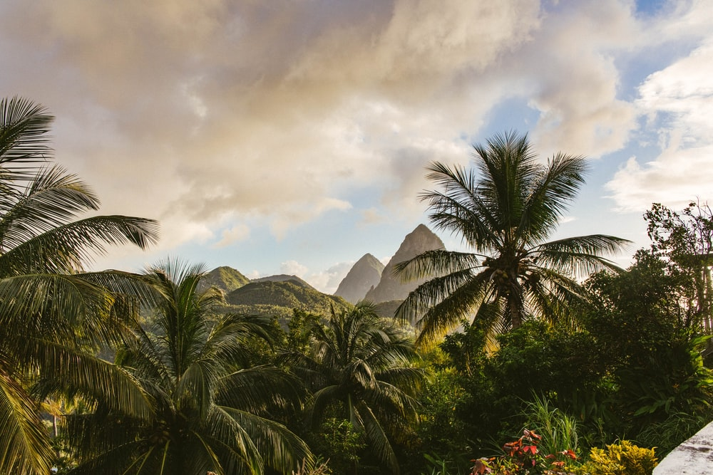 green palm tree near mountain under cloudy sky during daytime