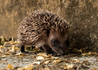 hedgehog on brown rock during daytime
