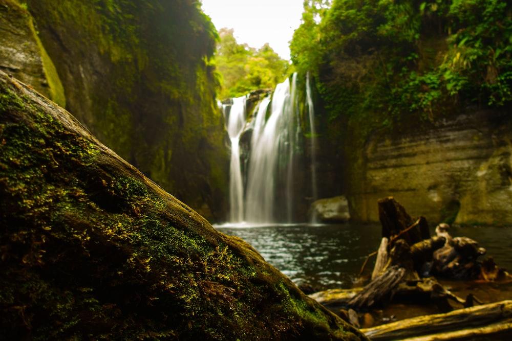 brown tree log near waterfalls during daytime