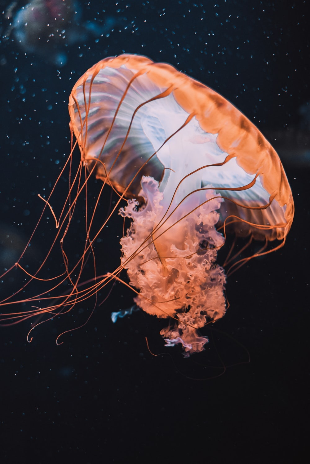 brown jellyfish in blue water