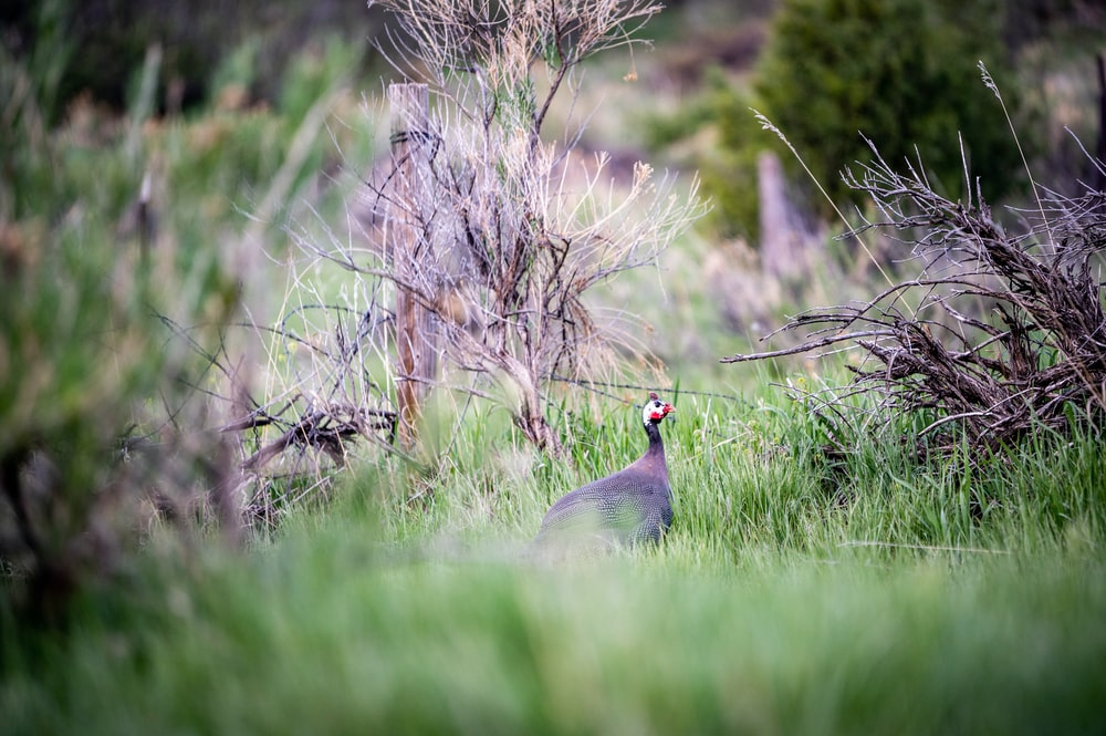 gray and black bird on green grass during daytime