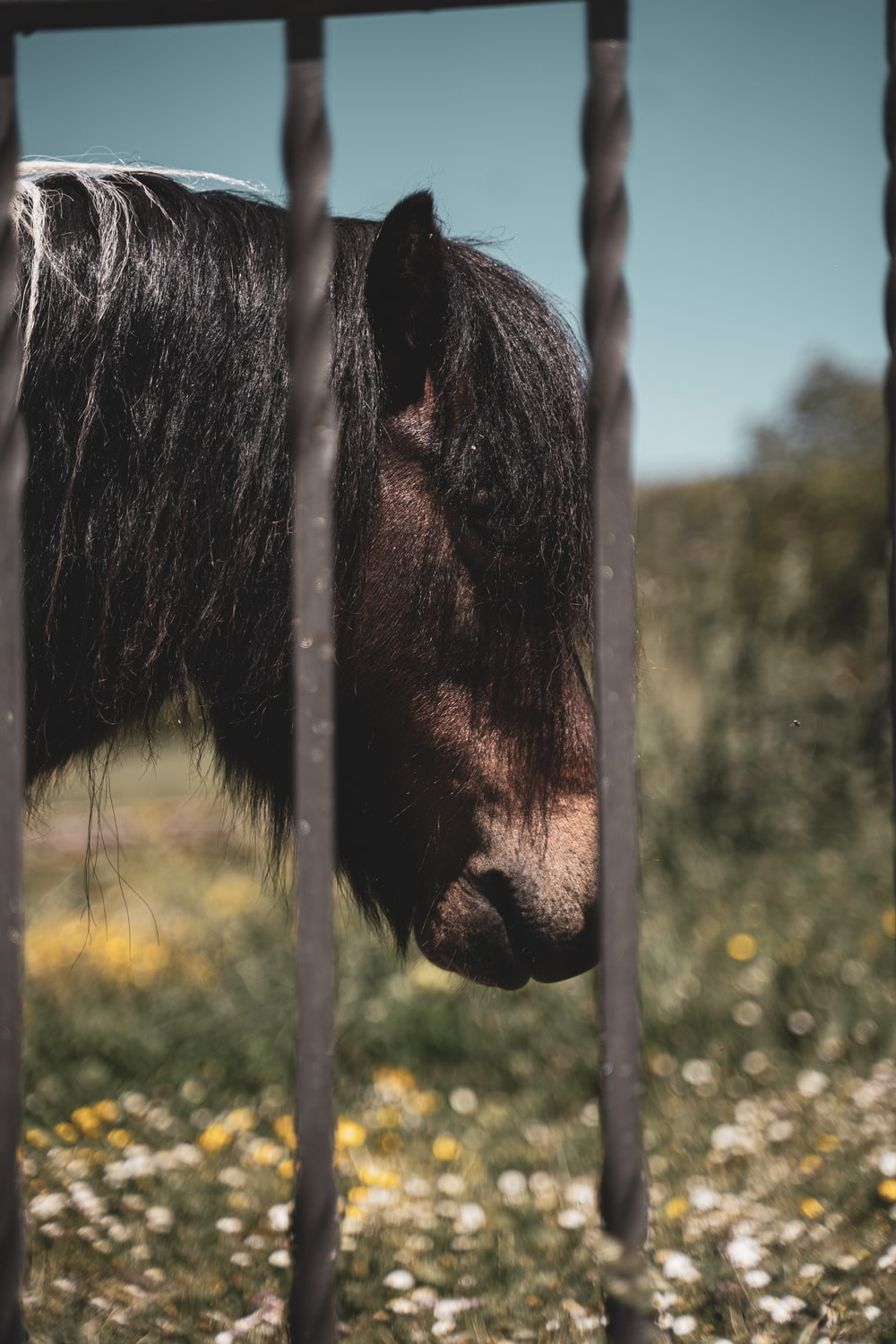 black horse in close up photography during daytime