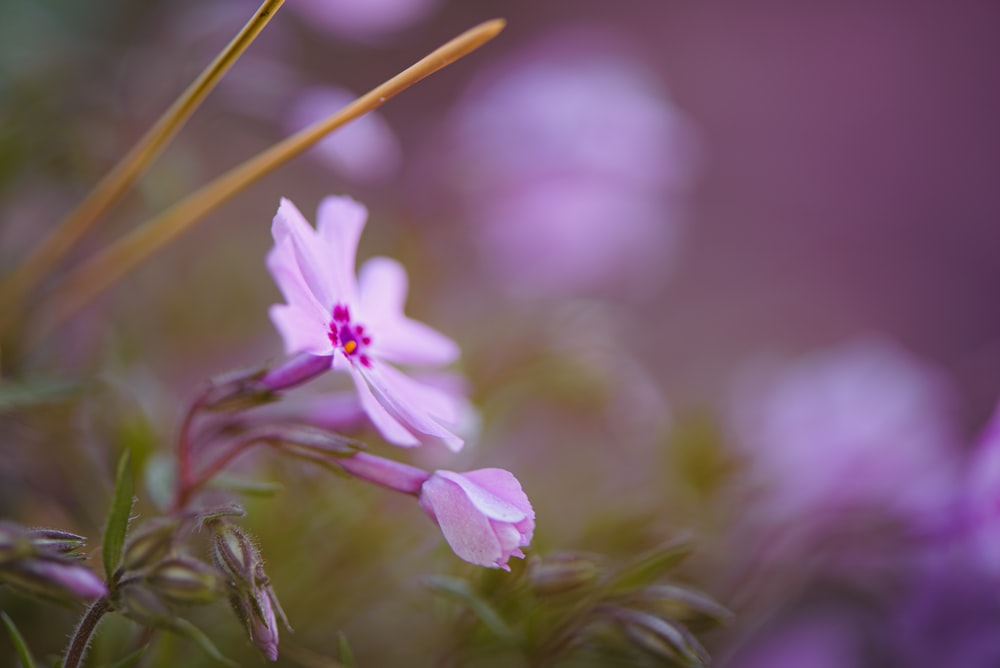 white and purple flower in tilt shift lens