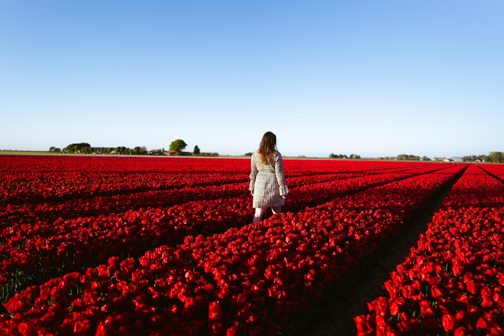 woman in white dress standing on red flower field during daytime