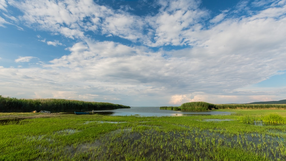 green grass field near body of water under blue and white cloudy sky during daytime
