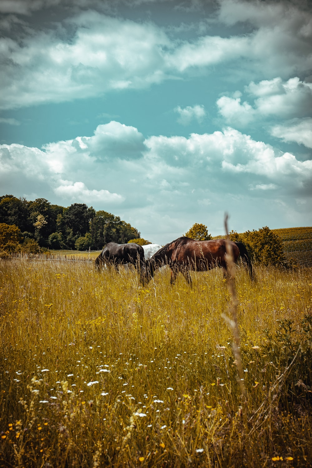brown and black horses on green grass field under blue and white cloudy sky during daytime