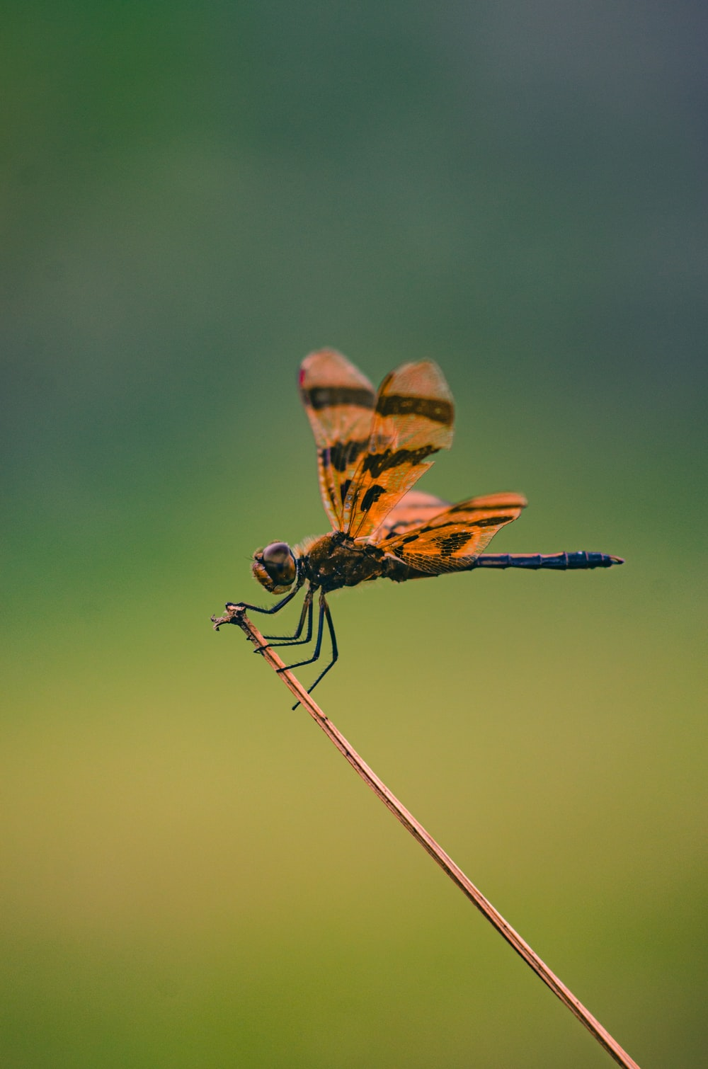 brown and black dragonfly in close up photography during daytime