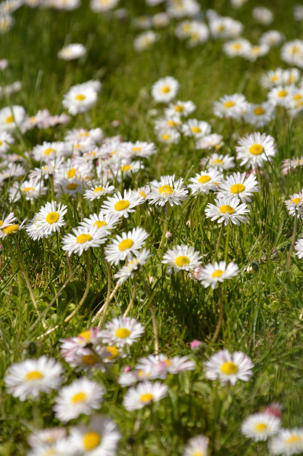 white and purple flowers on green grass