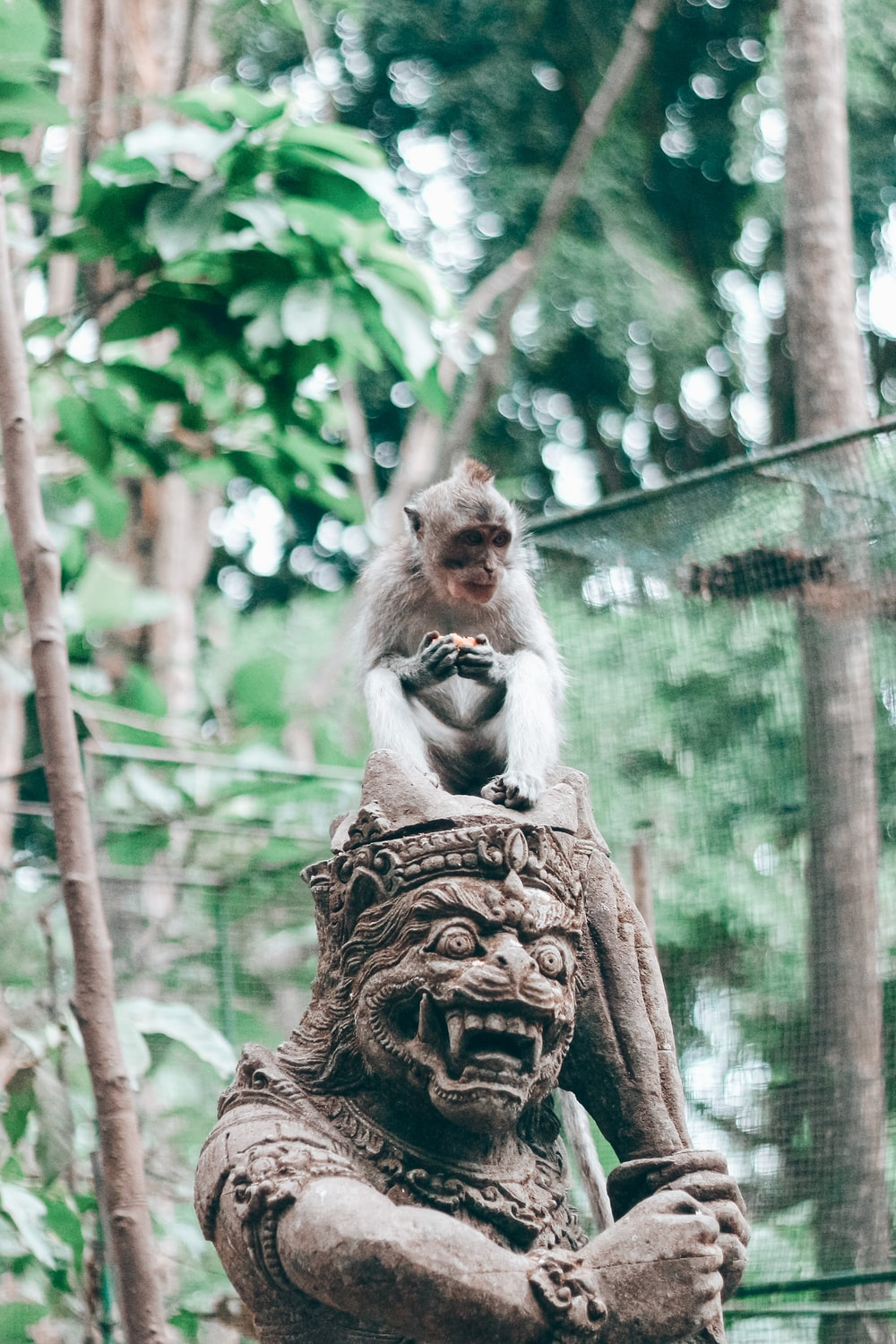 brown monkey on brown tree trunk during daytime