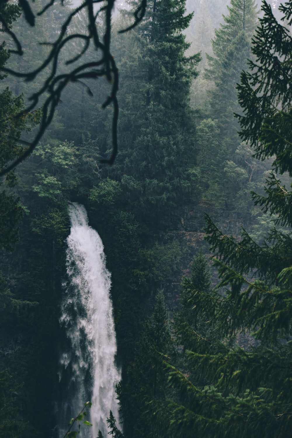 waterfalls in the middle of forest during daytime