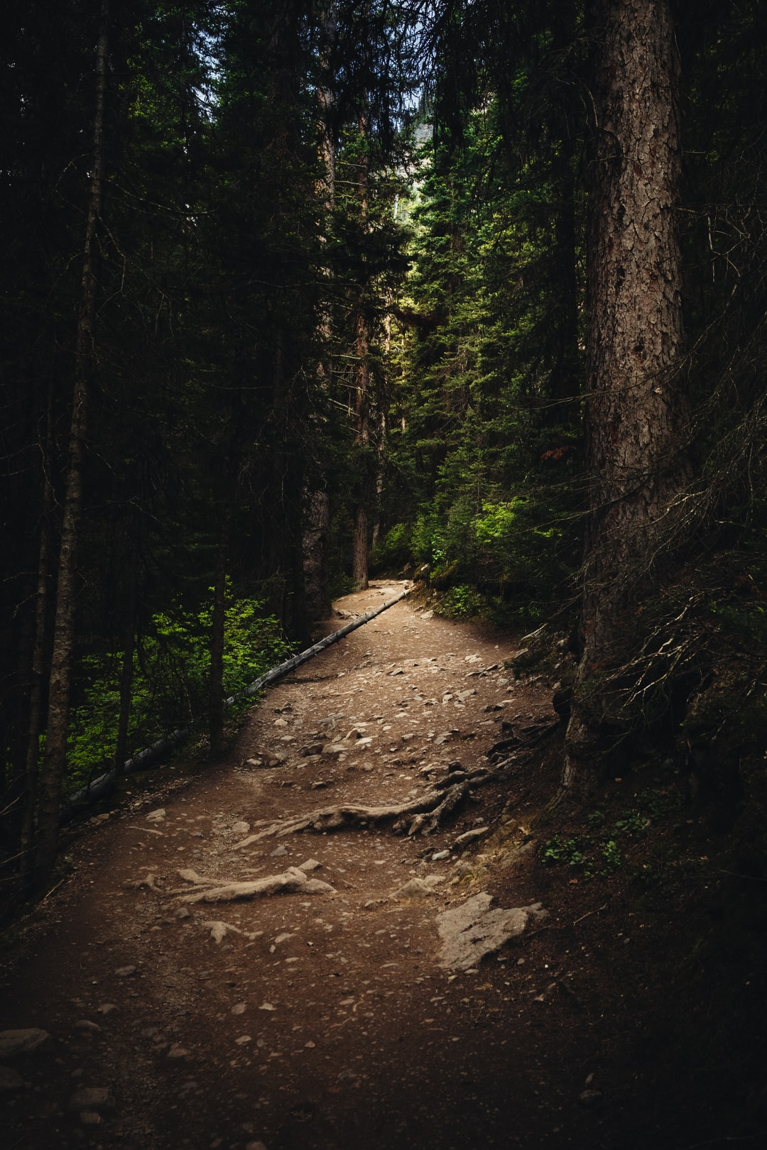 Walking up the trail that runs alongside Lake Louise and up to Lake Agnes. Not only does the shape of the path guide you, the light does too. Canada is beautiful, and even something as simple as walking through a forest can be such a picturesque thing.