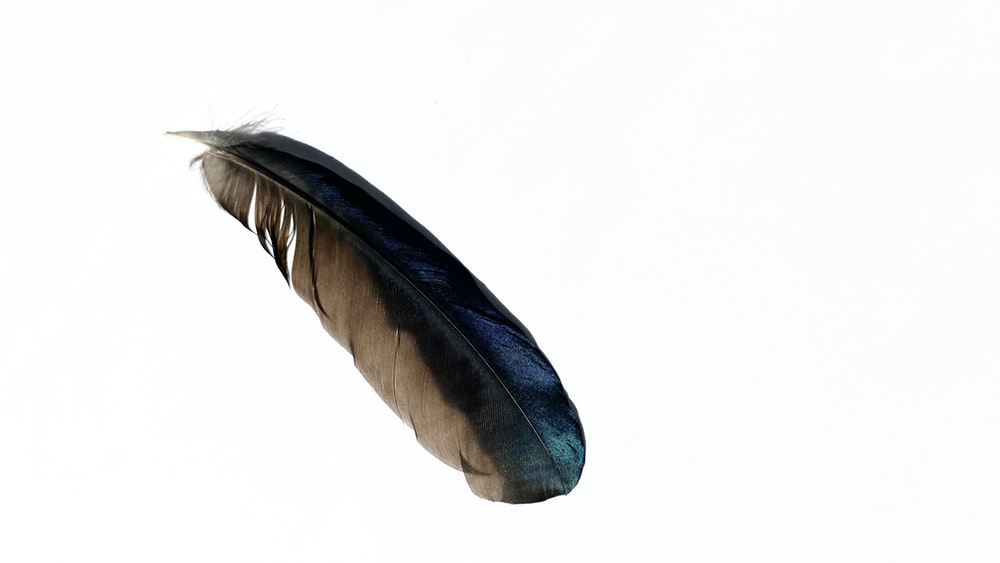 black and gray feather on white background