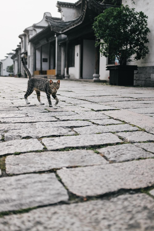 brown tabby cat walking on sidewalk during daytime