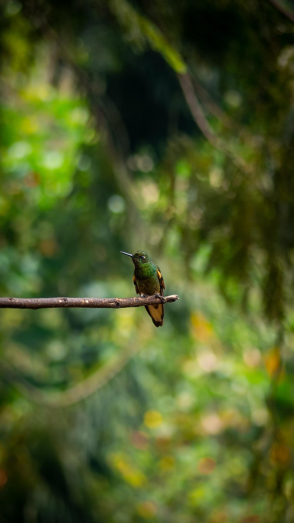 green and brown humming bird