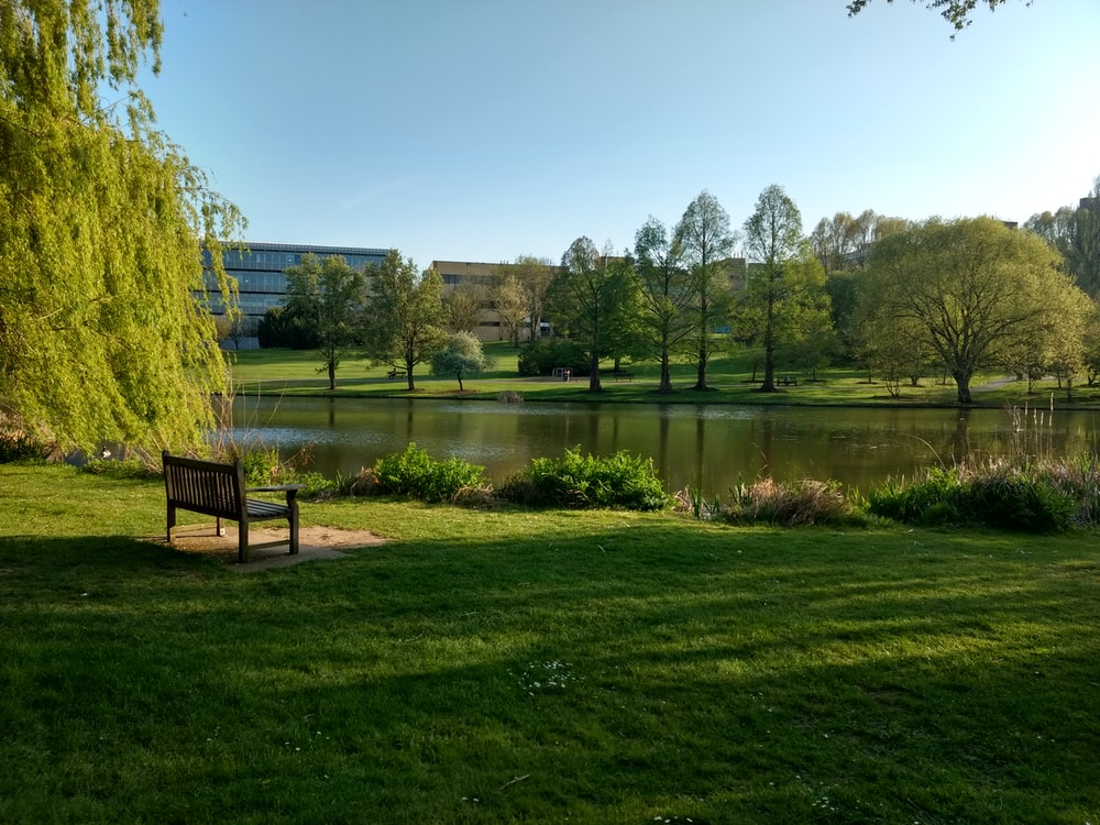 green grass field near lake under blue sky during daytime