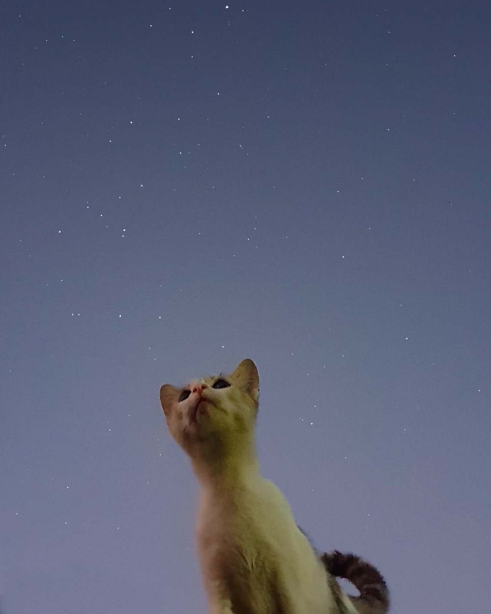 white cat looking at the stars