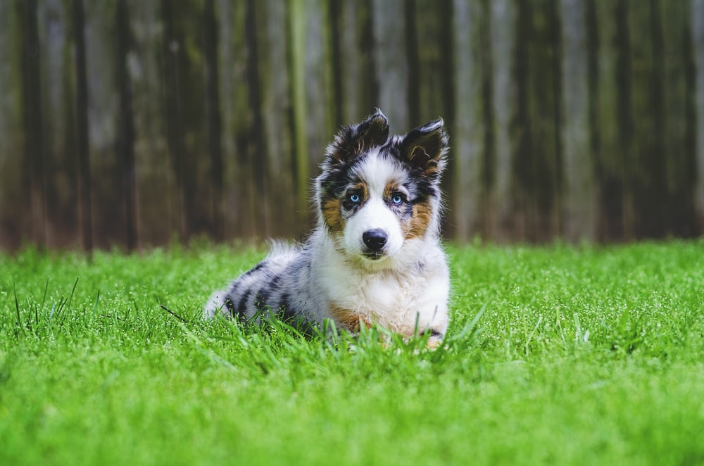 white black and brown long coated dog on green grass field during daytime