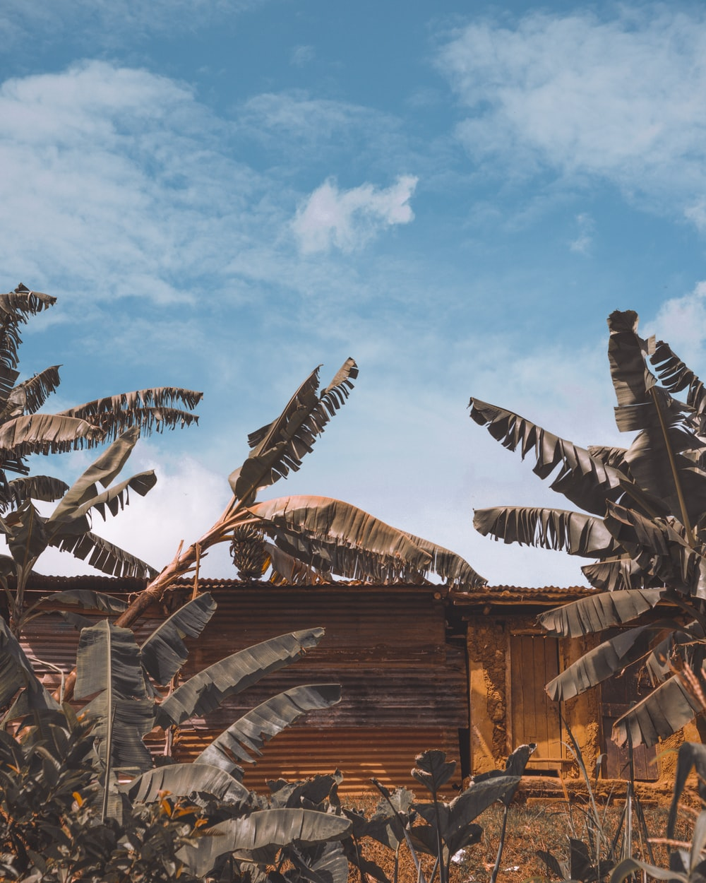 brown wooden building with birds flying during daytime