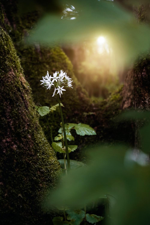 white flowers on green moss