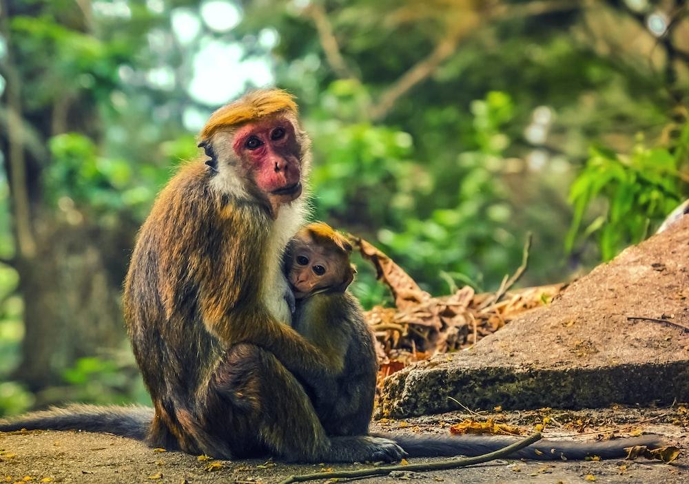 brown monkey sitting on brown log during daytime