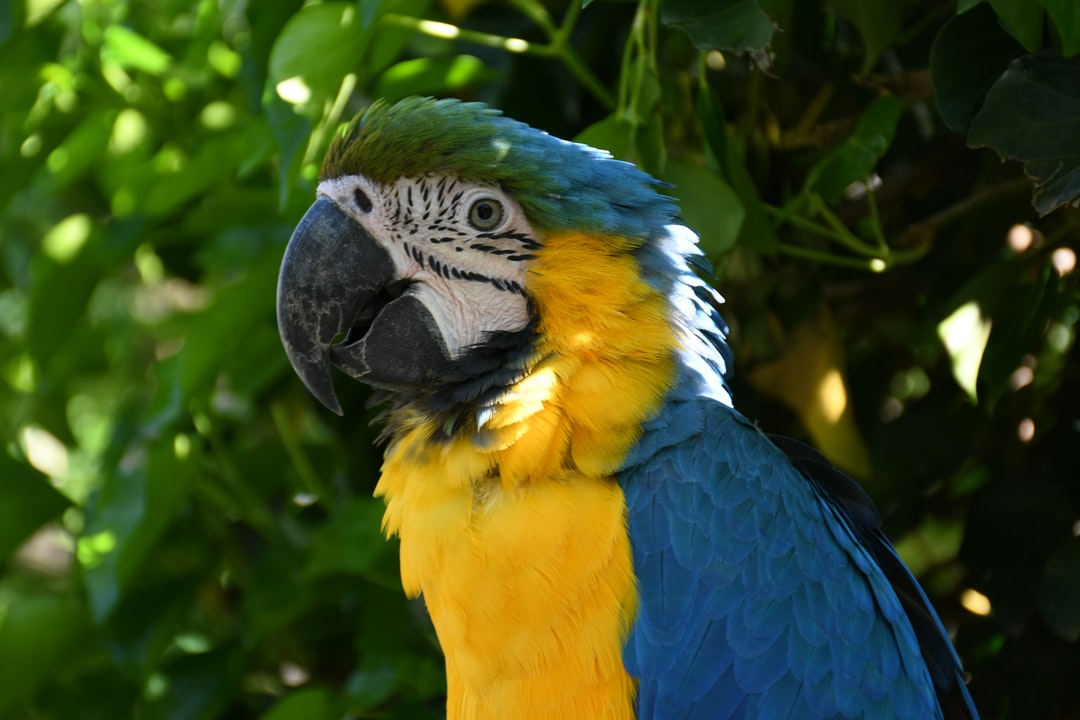 blue and gold macaw - ara ararauna Bird park - zoological park in Villars-les-Dombes/France